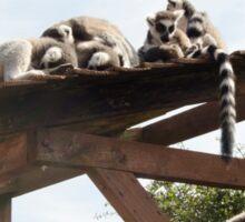 Sleeping Lemurs Sticker