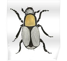 Cool Cute Bug Insect Drawing Poster