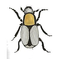 Cool Cute Bug Insect Drawing Photographic Print