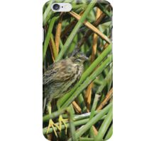 Striated Heron Perched in Reeds iPhone Case/Skin
