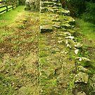 Hadrian's Wall, Lanercost by hans p olsen