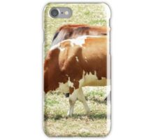 Cows in a Pasture iPhone Case/Skin