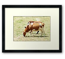 Cows in a Pasture Framed Print