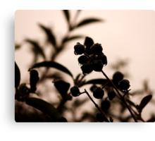 raindrops and hedge berries Canvas Print