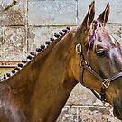 Dutch Harness Horse by jules572
