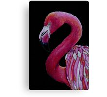 Pink Flamingo in Coloured Pencil Canvas Print