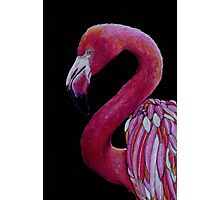 Pink Flamingo in Coloured Pencil Photographic Print