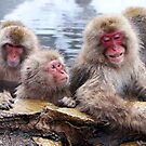 Snow monkeys by Hikaru Yagi