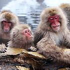 Snow monkeys by Tsuyoshi
