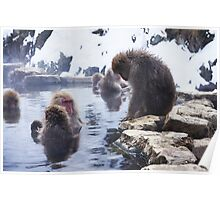 Snow monkeys2 Poster