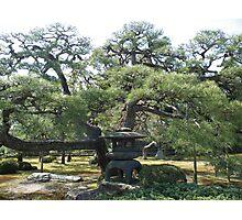 Japanese garden and pagoda Photographic Print