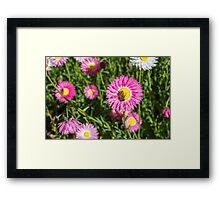 Paper Daisy  Framed Print