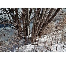 Winter by the pond Photographic Print