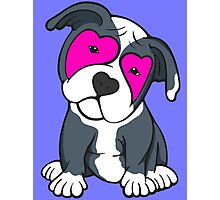 Love Hearts American Pit Bull Terrier Puppy  Photographic Print