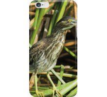 Striated Heron in Reeds iPhone Case/Skin
