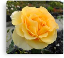 Rosa Sunstruck Canvas Print