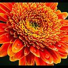 Macro Flower #1 by amira