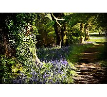 Along the bluebell walk Photographic Print