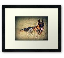 Straw Dog! Framed Print