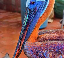 Galapagos Brown Pelican Waiting For A Free Meal by Al Bourassa