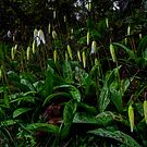 Wake Up Sleepy Head ~ Fawn Lilly ~ by Charles & Patricia   Harkins ~ Picture Oregon
