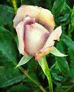Seashell Rose by RC deWinter