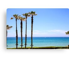 Palm trees on a beach. Photographed on the Mediterranean shore Canvas Print