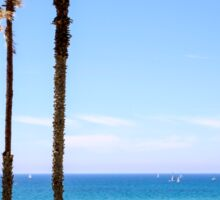 Palm trees on a beach. Photographed on the Mediterranean shore Sticker