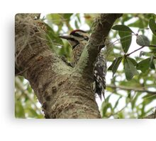 Woodpecker eating dinner Canvas Print