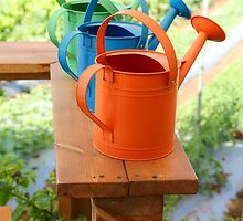Watering cans at a small Organic vegetable patch  by PhotoStock-Isra