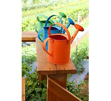 Watering cans at a small Organic vegetable patch  Photographic Print