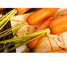 Home grown carrots from a small Organic vegetable patch  Photographic Print