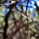 Wind-blown web by Karen01