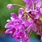 January Blossom by tropicalsamuelv