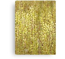 Marsh Willow Canvas Print