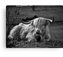 Peaceful Cow Canvas Print