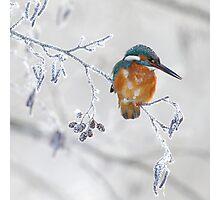 Ice bird Photographic Print
