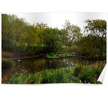 Wetlands Area At Escot Park, Devon.UK Poster