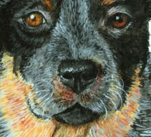 Beaut Australian Cattle Dog Sticker