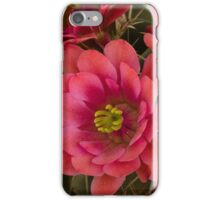 Pink Hedgehog Cactus Flowers  iPhone Case/Skin