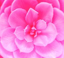 Abstract Pink Rose by MMPhotographyUK