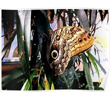 Owl Eye Butterfly On A Leaf Poster