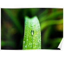 Morning Dew Water Drop Poster