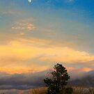 Desert Skies by Barbara  Brown