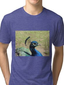 Peacock, Launceston Gorge Tri-blend T-Shirt