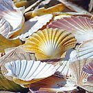 Seashells by jacqi