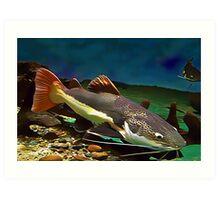 Amazon Catfish Art Print