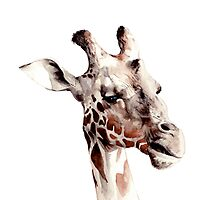 Giraffe Watercolour by Debbie Jew