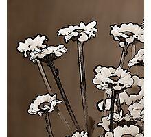 Coffee daisies Photographic Print