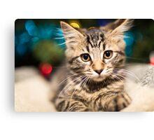Gorgeous kitten Canvas Print